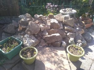 herbs rockery